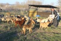 HAYVAN SEVERLER - 3 Bin Sokak Köpeğine Bakıyor