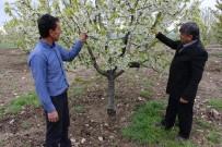 OSMAN ACAR - Ani Hava Değişiklikleri Çiftçileri Strese Soktu