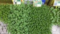 Burhaniye'de Sebze Fidesi Satışına Büyük Talep