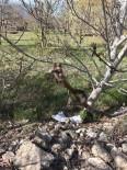 HAVA SICAKLIĞI - Çameli'de Don Ceviz Ağaçlarını Olumsuz Etkiledi