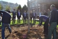 REKTÖR - GAÜN 500 Çınar Fidanı