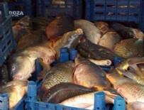Kaçak avcılar 5 ton balıkla yakalandı
