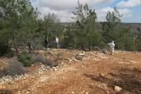 YUMURTA - Mersin'de Orman Zararlılarıyla Biyolojik Mücadele Sürüyor