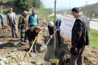 DENETİMLİ SERBESTLİK - Yalova'da Hükümlüler Bin 260 Fidan Dikti