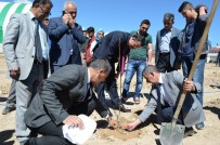 Adilcevaz'da Üniversite Öğrencileri Fidan Dikti