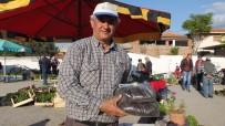 SOLUCAN GÜBRESİ - Burhaniye'de Emekli Eğitimci Örnek Fideci Oldu