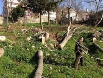GEZİ PARKI - CHP'li belediyenin heykel aşkı