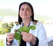 KOZALAK - Fındık Üreticisine 'Kozalak Akarı' Uyarısı