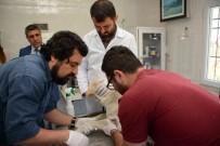 KAN TESTİ - Osmaniye'de Sokak Hayvanlarına Kan Testi