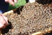 Uysal Arılar Elden Ele Dolaştı