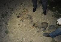 BULDUK - Yavru Köpekler Vahşice Katledildi