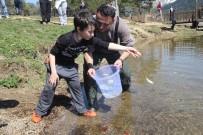ABANT - Abant Gölü'ne 51 Bin Balık Salındı