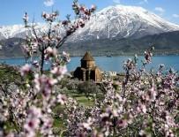 AKDAMAR ADASı - Akdamar Adası çiçeklere büründü