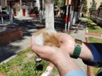 YAVRU KEDİ - Atık Su Borusuna Sıkışan Yavru Kediyi İtfaiye Kurtardı