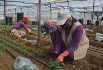VATANDAŞLıK - Bin 974 Nüfuslu Köy Yılda 70 Milyon TL'lik Kesme Çiçek Üretiyor