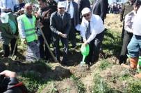 NUSRET DIRIM - 12 Dekarlık Arazide KYK Ormanı Oluşturuldu