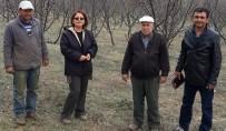 FEROMON - Aydın'da Elma Üreticilerine Eğitim Verildi