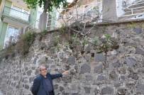 Duvarda Yetişen İncir Ağacı Meyve Verdi
