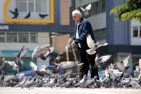 HAYVAN SEVGİSİ - Her Gün Kilolarca Yem Satın Alıp Yabani Güvercinleri Besliyor