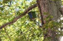 HAYVAN SEVERLER - İlkokul Öğrencileri Sokak Kedileri Ve Kuşlar İçin Barınak Yapıldı