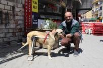 AMELIYAT - Duyarlı Esnaftan Felçli Köpeğe Yürüteç