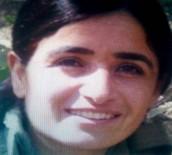 İşte öldürülen PKK'nın sözde sorumlusu