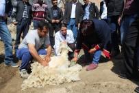 HAYVAN - Malatya'da Koyun Kırkım Kursu