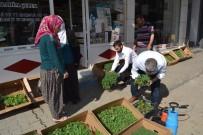DOĞAL ÜRÜN - Organik Tarım Ürünleri Vatandaşlardan Yoğun Talep Görüyor