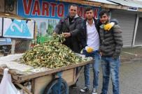 İŞSİZ GENÇLER - Baharın Müjdeleyicisi Gülbahar Bitkisi Çıktı