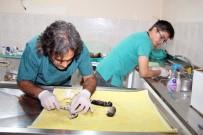 DEĞIRMENBAŞı - Telef Olan Hamile Kedi Sezaryene Alındı