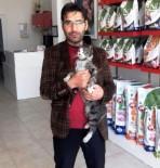 SOKAK KEDİSİ - Zehirlenen Kediyi Fabrika İşçisi Kurtardı