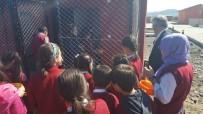 Bingöl'de Öğrenciler, Sokak Hayvanları Besledi