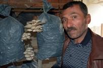 İSTIRIDYE - Ek Gelir Olsun Diye Başladı, Şimdi Para Basıyor