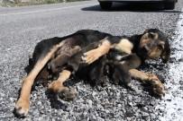 KONYAALTI BELEDİYESİ - Konyaaltı Belediyesi 7 Yavrulu Köpeğe Sahip Çıktı