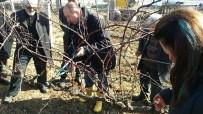 EKOLOJIK - Bağlarda Kış Budaması Eğitimi Tamamlandı