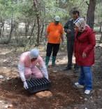 ÇAM KESE - Ormanları Terminatör Böcekler Koruyacak
