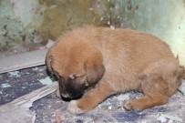 YAVRU KÖPEK - Apartman Boşluğuna Düşen Yavru Köpeği İtfaiye Ekipleri Kurtardı