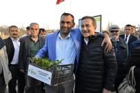 GAZİ YAKINI - Hobi Bahçelerinde Fide Dağıtımı Yapıldı