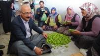 ATAYURT - Kalkınma Bakanı Elvan Silifke'de Şalvar Giydi Çiftçilerle Buluştu