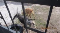 HAYVAN SEVERLER - Köpek Dövüşüne Hayvanseverlerden Tepki