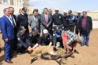 AHMET YILDIRIM - Polis Kazalara Karşı Kurban Kesti