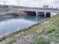 SULAMA KANALI - Bir İnek Sulama Kanalına Düştü, 13'Ü Peşinden Atladı
