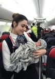 KORDON - Hamile Kadın Uçakta Doğum Yaptı