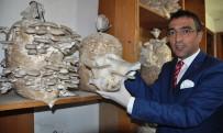 POTASYUM - Milas'ta Yeni Alternatif Gelir Kaynağı; Kayın Mantarı