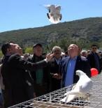 HAKEM HEYETİ - 81 İlin Güvercin Severleri Muğla'da Festivalde Buluştu
