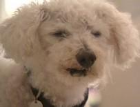 MANŞ DENIZI - Kaybolan köpeğin 11 yıllık yolculuğu