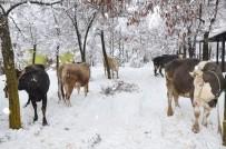 KURBAN BAYRAMı - Kahramanmaraş'ta 200 Yıldır Süren Gelenek