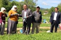 DENGESİZ BESLENME - Baştuğ Çiftçi Bayramını Çiftçinin Ayağına Giderek Kutladı