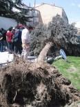 Belediye İşçisinin Üzerine Ağaç Devrildi