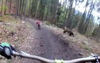 SLOVENYA - Bisikletliler Ayıdan Kıl Payı Kurtuldu